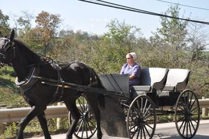 AmishSingle